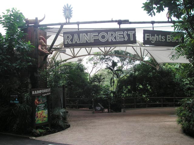 Rainforest Fights Back